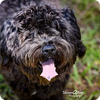 Adopt A Pet :: Cole - Daleville, AL