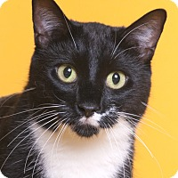 Adopt A Pet :: Sylvester - Chicago, IL