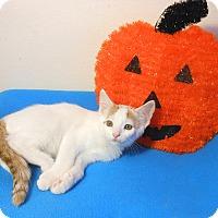 Adopt A Pet :: Freckles - Glendale, AZ