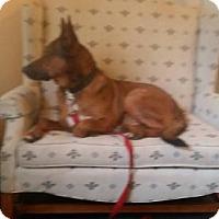 Adopt A Pet :: Sully - Citrus Springs, FL