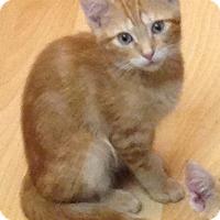 Adopt A Pet :: Nash - Staten Island, NY