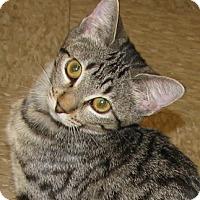 Adopt A Pet :: Karen - Tulsa, OK