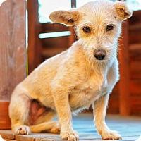 Adopt A Pet :: YOSHIE - pasadena, CA