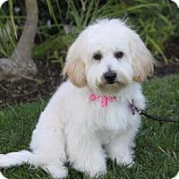 Adopt A Pet :: KRISTEN - Newport Beach, CA