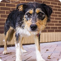 Cattle Dog Mix Dog for adoption in Mooresville, North Carolina - Chachi
