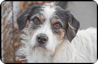 Terrier (Unknown Type, Medium) Mix Dog for adoption in Brick, New Jersey - Gilly