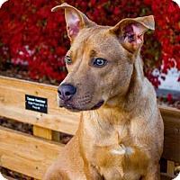 Adopt A Pet :: NEGAN - Olivette, MO