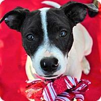 Adopt A Pet :: Natalia - Fayette, MO