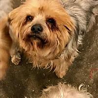 Adopt A Pet :: Susie - Goodyear, AZ