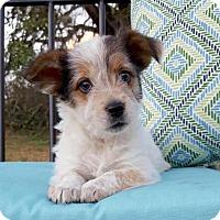 Adopt A Pet :: Tawny - Pipe Creed, TX