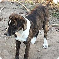 Adopt A Pet :: Saffron - Joliet, IL