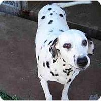 Adopt A Pet :: Alice - Scottsdale, AZ