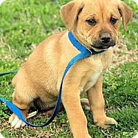 Adopt A Pet :: Dory - Staunton, VA