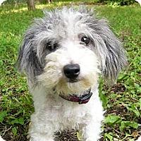 Adopt A Pet :: Panda - Mocksville, NC