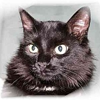 Adopt A Pet :: Kahlua - Montgomery, IL