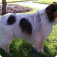 Adopt A Pet :: Heather - Charlottesville, VA