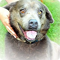 Adopt A Pet :: Smokey - Linton, IN