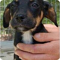 Adopt A Pet :: Bob - Staunton, VA