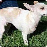 Adopt A Pet :: Bambi & Daisy - Gilbert, AZ