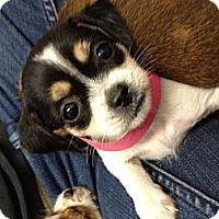 Adopt A Pet :: Pam - Los Angeles, CA