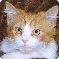 Adopt A Pet :: Tyler - Renfrew, PA