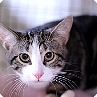 Adopt A Pet :: Limbertwig - Chicago, IL