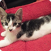 Adopt A Pet :: Meadow - Colmar, PA