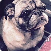 Adopt A Pet :: Harley Joe - Tontitown, AR