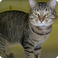 Adopt A Pet :: Chester - Hamburg, NY