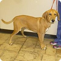 Adopt A Pet :: Victor - Oviedo, FL