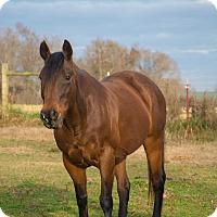 Adopt A Pet :: Ginger $1000 - Seneca, SC