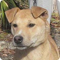 Adopt A Pet :: Apollo - Oakland, AR