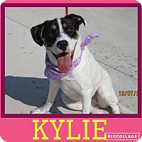 Adopt A Pet :: Kylie - big lovebug! - Columbia, MD