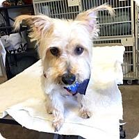 Adopt A Pet :: Charlie - Sudbury, MA