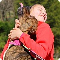 Adopt A Pet :: Nova - Glastonbury, CT