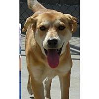 Adopt A Pet :: Danica - Springdale, AR