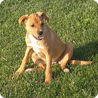 Adopt A Pet :: Heidi - Harrisonburg, VA