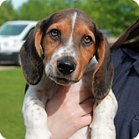 Adopt A Pet :: Willow-PENDING - Garfield Heights, OH