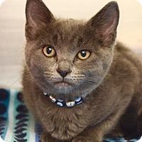 Adopt A Pet :: Aurora - Dublin, CA