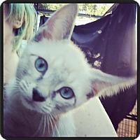 Adopt A Pet :: Kimba - Los Angeles, CA