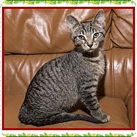 Adopt A Pet :: Cozumel - Mt. Prospect, IL