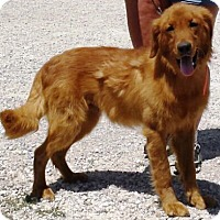 Adopt A Pet :: I'M ADOPTED Dublin Ayers - Oswego, IL