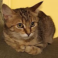 Adopt A Pet :: Zena - Auburn, CA