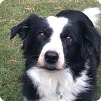 Adopt A Pet :: *Scout (& Heidi) - Mobile, AL