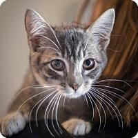 Adopt A Pet :: Trix - St Helena, CA
