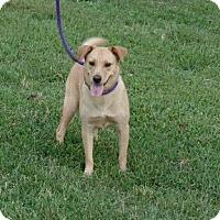 Adopt A Pet :: Norma Jean - Great Falls, VA