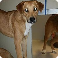 Adopt A Pet :: Nadia - Westminster, CA