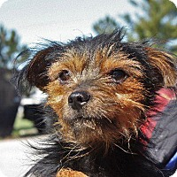 Adopt A Pet :: Jacoby - Angola, IN