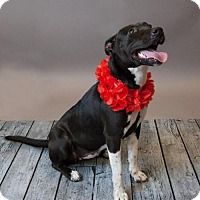 Adopt A Pet :: Zoey - Rockwall, TX