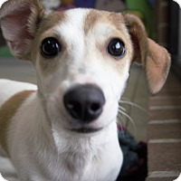 Adopt A Pet :: Victorio - Seattle, WA